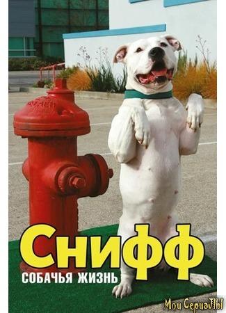 кино Снифф: Собачья жизнь (Sniff: The Dog Movie) 17.05.20