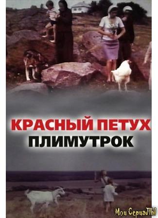 кино Красный петух плимутрок 17.05.20