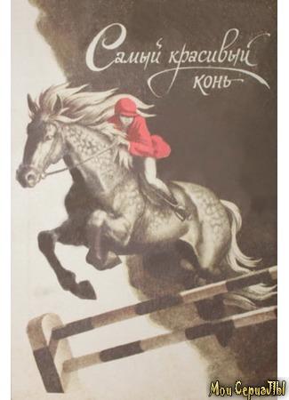 кино Самый красивый конь 17.05.20