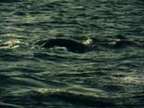Когда уходят киты