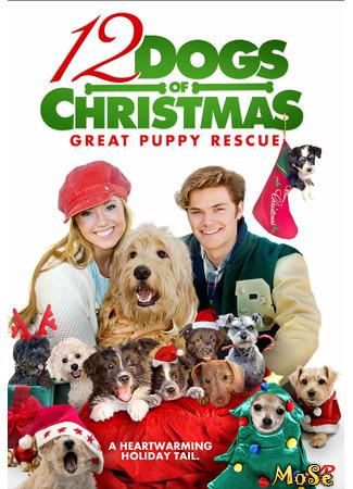 кино 12 рождественских собак 2 (12 Dogs of Christmas: Great Puppy Rescue) 18.01.21